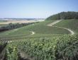 Weinberg des Weingutes Lutz - mit freundlicher Genehmigung des Weingutes Lutz